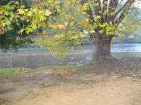 Nature en automne.