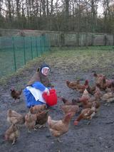 Les poules ont faim !