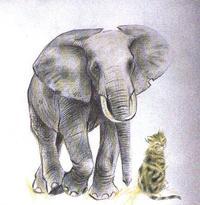 jpg_elephant_chat