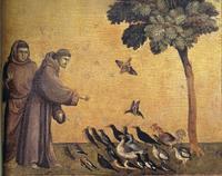 Prédication aux oiseaux François Assise