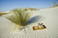 desert careme