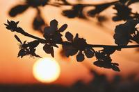sunrise-5034908_1920