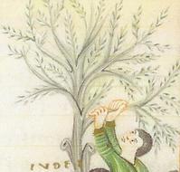 Symbolique de l'arbre: figuier maudit, figuier qui porte des fruits, l'arbre de la croix?