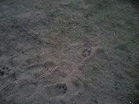 Un pied sans chaussure, sur le sable de Calais, face à la mer du Nord, température: +2