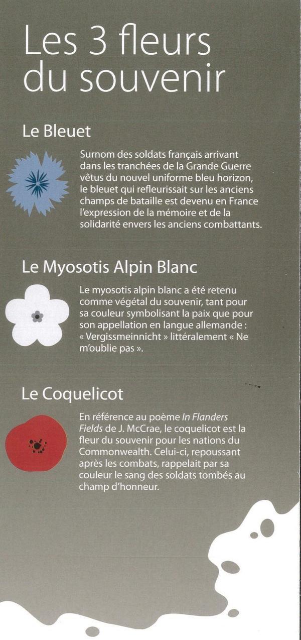 Les 3 fleurs du souvenir